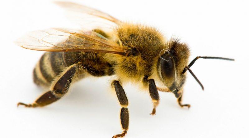 arı sokmasına ne iyi gelir